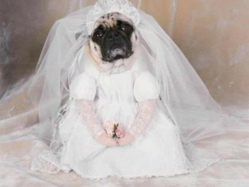 cute-bride