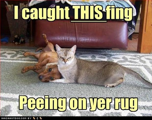 funny-cats-and-dogs-peeing-on-the-carpet