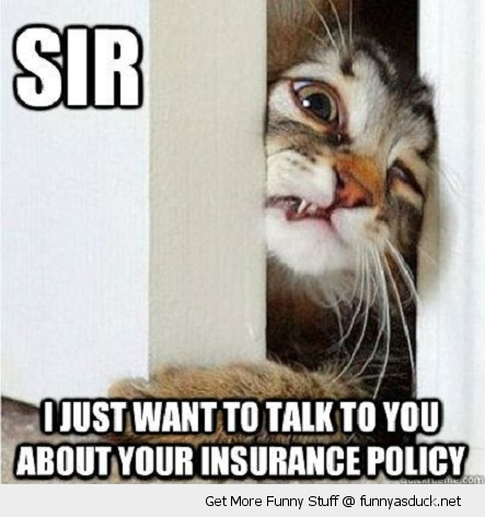 funny-sir-talk-insurance-door-face-paw-pics
