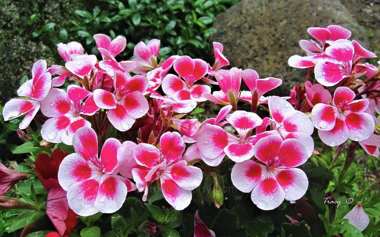 Joanie's Garden II